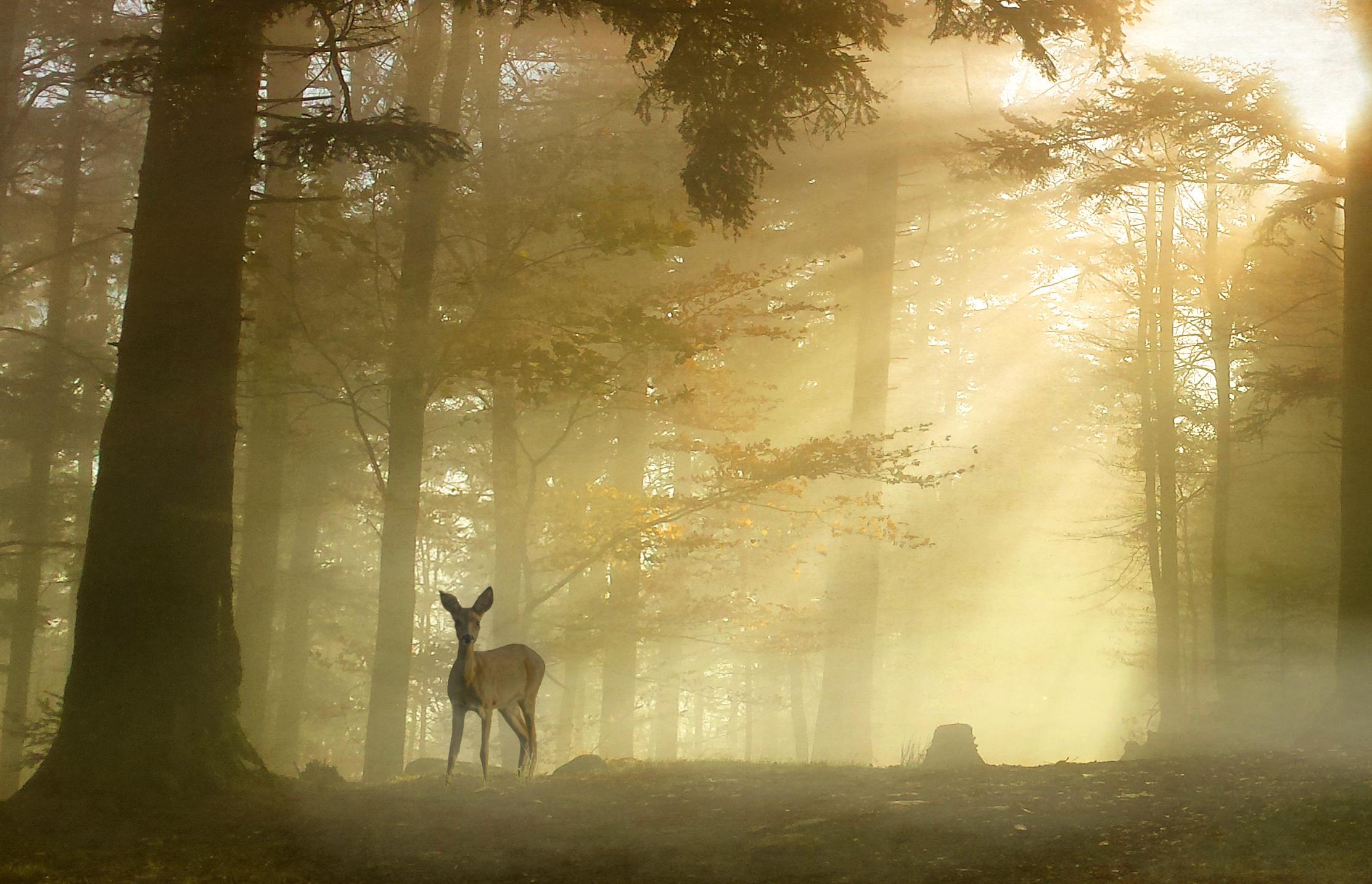Woodland Fantasy
